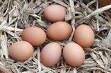 помста сирих яєць