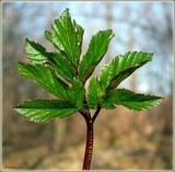 листя свіжого салату багаті вітамінами