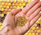 «бджолиний хліб» - всьому голова
